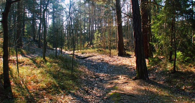 solbergaskogen